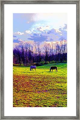 Horses Grazing In Indiana Image Framed Print by Paul Price