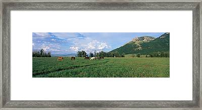 Horses Grazing In Pasture Framed Print by Panoramic Images