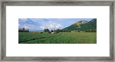 Horses Grazing In Pasture Framed Print