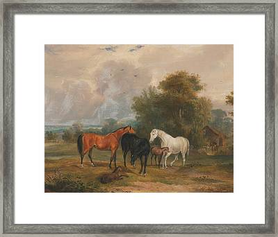 Horses Grazing - Mares And Foals In A Field Framed Print