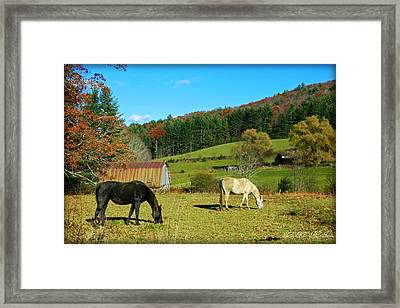 Horses Grazing The Pasture Framed Print