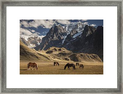 Horses Grazing Under Siula Grande Framed Print by Colin Monteath