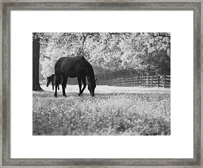 Horses In A Field Of Flowers Framed Print