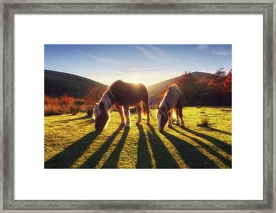 Horses In Austigarmin Framed Print