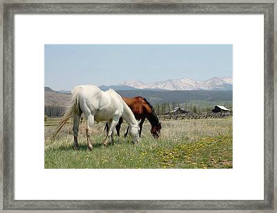 Horses In Colorado Framed Print by Brittany Graham
