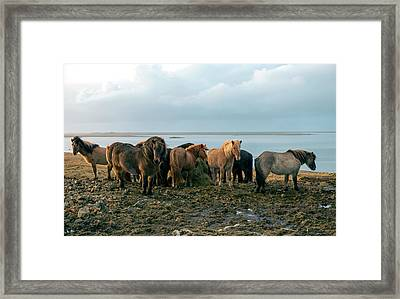 Framed Print featuring the photograph Horses In Iceland by Dubi Roman