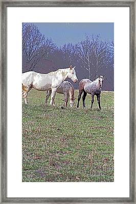 Horses In Indiana Image Framed Print by Paul Price
