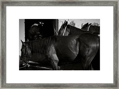 Horses In Mexico Framed Print by Dane Strom