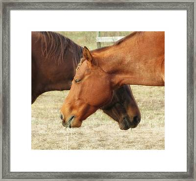 Horses In Sinc Framed Print