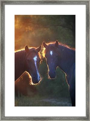 Horses In The Early Morning Framed Print