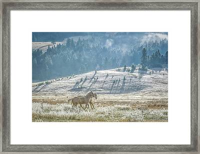 Horses In The Frost Framed Print by Keith Boone