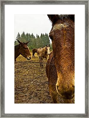 Horses In The Rain Framed Print by Dale Stillman