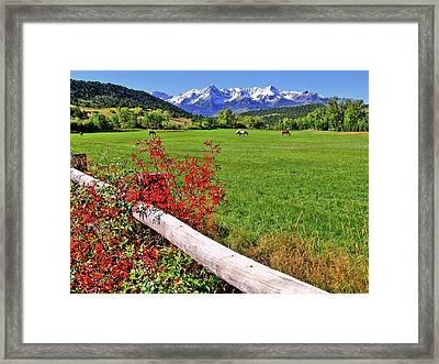 Horses In The San Juans Framed Print