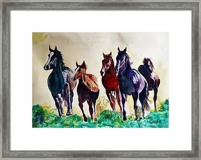 Horses In Wild Framed Print