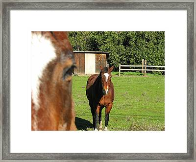 Horses Framed Print by Kathy Roncarati