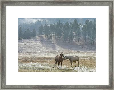 Horses On A Montana Ranch Framed Print