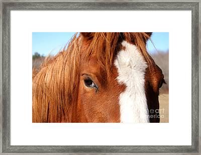 Horse's Mane Framed Print