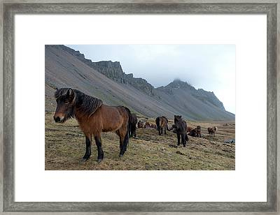 Framed Print featuring the photograph Horses Near Vestrahorn Mountain, Iceland by Dubi Roman