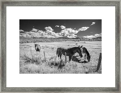 Horses Of San Juan Framed Print by Jon Glaser