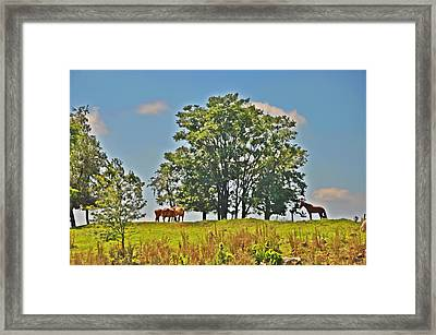 Horses On A Hill Framed Print by Bill Cannon