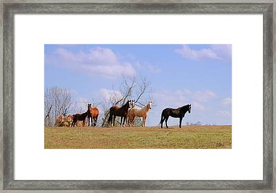 Framed Print featuring the photograph Horses On The Hill by Bonnie Willis