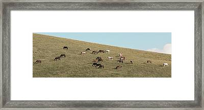 Horses On The Hill Framed Print