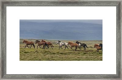 Horses Running In The Countryside Framed Print