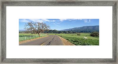 Horses, Santa Ynez Mountains In Spring Framed Print by Panoramic Images