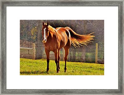 Horse's Tail Framed Print