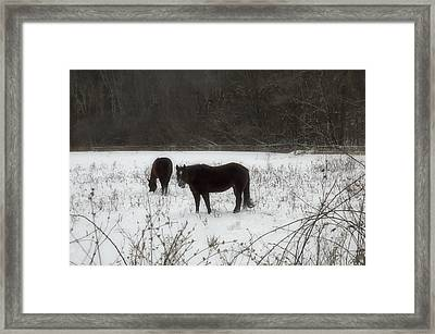 Horses Two Framed Print by Ross Powell