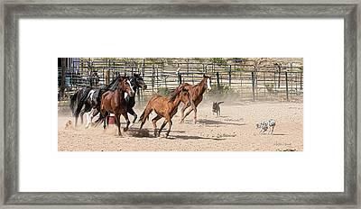 Horses Unlimited #3a Framed Print