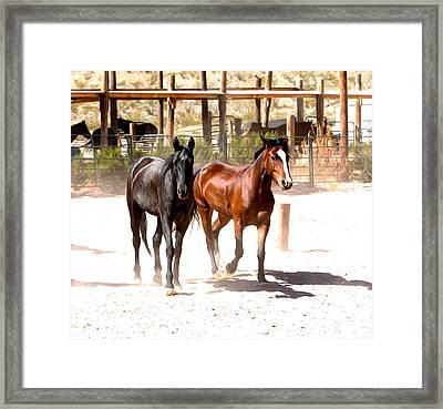 Horses Unlimited_6a Framed Print
