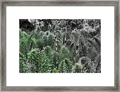 Horsetail Dewpoint Framed Print