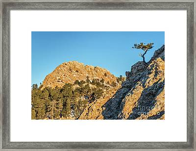 Horsetooth Rock And Pine Tree Framed Print by Marek Uliasz
