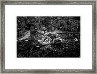 Hortencias-bosque Do Silencio-campos Do Jordao-sp Framed Print