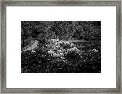 Hortencias-bosque Do Silencio-campos Do Jordao-sp Framed Print