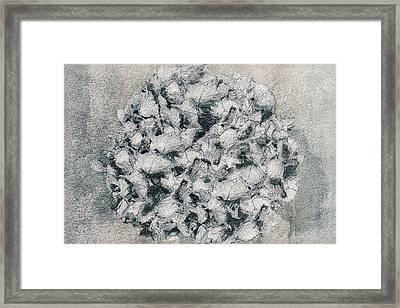 Hortensius Framed Print