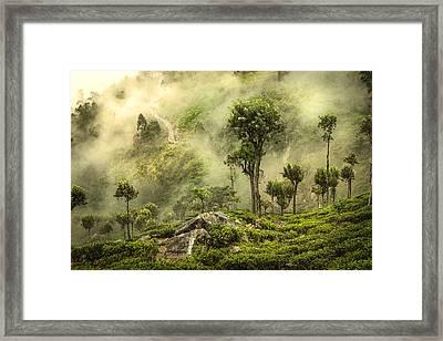 Horton's Planes - Tea Plantation Framed Print by Martin Bisof