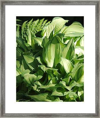 Hosta 5416 Framed Print