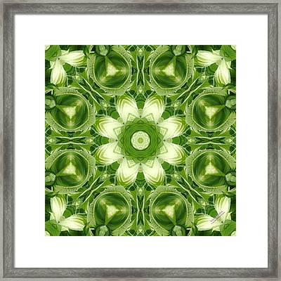 Hosta 5416k8 Framed Print