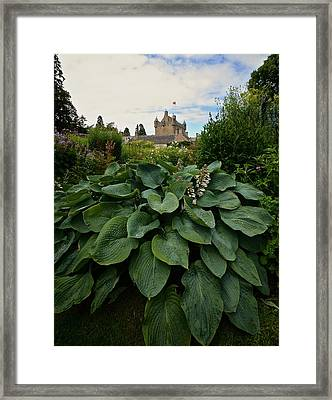 Hosta At Cowdor Castle Framed Print