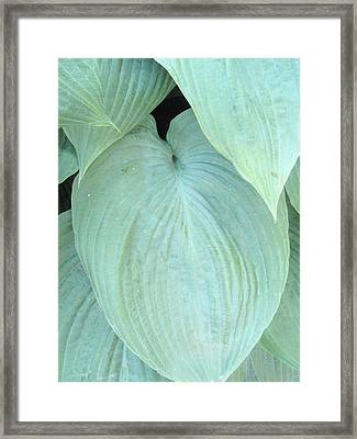Framed Print featuring the photograph Hosta by Beth Akerman