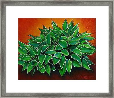 Hosta Framed Print by Doug Strickland