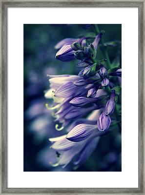 Hosta Petals Framed Print by Jessica Jenney