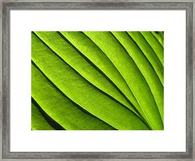 Hosta Leaf 2 Framed Print
