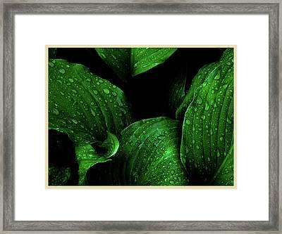 Hostas After The Rain I Framed Print