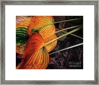 Hostas In Autumn Framed Print