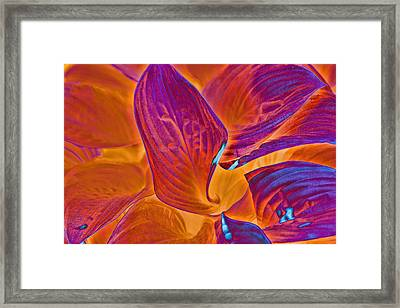 Framed Print featuring the photograph Hostas With Sabattier by Bill Barber