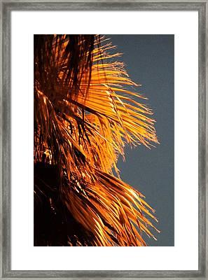 Hot Air Frizzies Framed Print