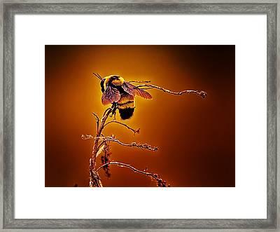 Hot Buzz Framed Print by Bill Tiepelman